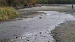 Thumbnail of Salmon Swimming Upstream to Spawn