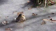 Thumbnail of Alligators in ice!
