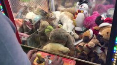 Thumbnail of Cat Stuck in a Claw Machine
