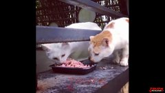 Thumbnail of Cats & Dogs WTF Moments Caught On Camera