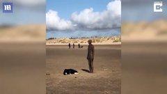 Thumbnail of Daft dog
