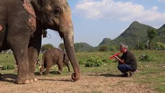 Thumbnail of Baby Elephant and Red Toy Clarinet