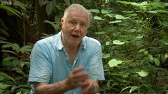 """Thumbnail of Incredible """"Toilet"""" plant 