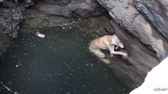 Thumbnail of A drowning dog's desperate wish comes true