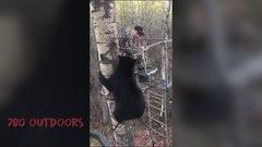 Thumbnail of Very close encounter with a black bear