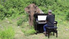 Thumbnail of Blind Elephant Loves the Piano