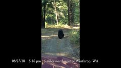 Thumbnail of Black bear jumps on hood of vehicle