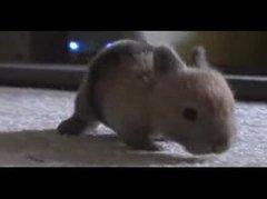 Thumbnail of Baby Bunny