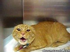 Thumbnail of Devil Cat