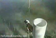 Thumbnail of Who needs a fishing pole!