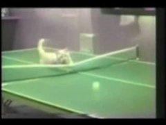 Thumbnail of Acrobatic cats