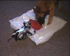 Thumbnail of Dog attacks AIBO