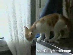 Thumbnail of Jumping Kitty