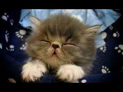 Thumbnail of Cats 300