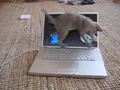 Thumbnail of Cat uses MacBook
