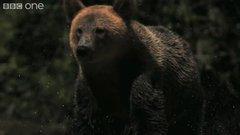 Thumbnail of Slow motion of bear shaking water.