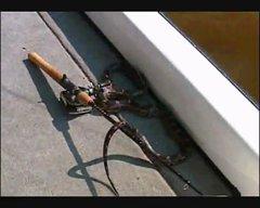 Thumbnail of Fishing Bloopers