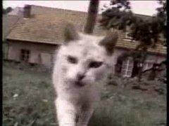 Thumbnail of Funny cats