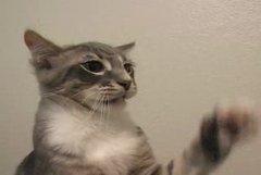 Thumbnail of Cat fight on stools