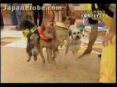 Thumbnail of Jump rope dogs