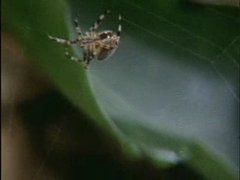 Thumbnail of Spiders on drugs