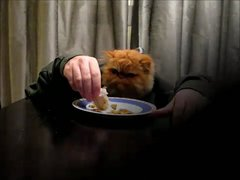 Thumbnail of Cat enjoying dinner