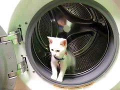 Thumbnail of Wash Machine Kitty