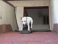 Thumbnail of Skateboarding dog #3