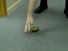 Thumbnail of The turtle that knows dog-tricks