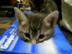 Thumbnail of Kittens and a tissue box