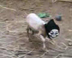 Thumbnail of Black sheep