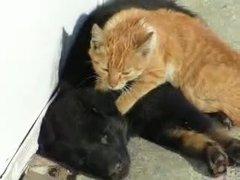 Thumbnail of Cat massage