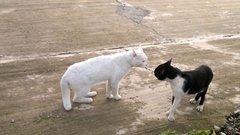 Thumbnail of Angry cobra-cat