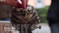 Thumbnail of Lovely Owl