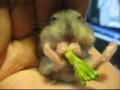 "Thumbnail of Mocha in ""His First Broccoli!"""