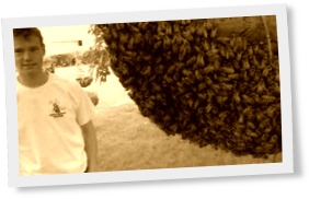 Thumbnail of Honeybee Swarm With Bare Hands