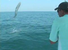 Thumbnail of 18 kg Barracuda Jumps Into Fishing Boat