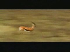 Thumbnail of Gazelle