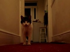 Thumbnail of Talking cat